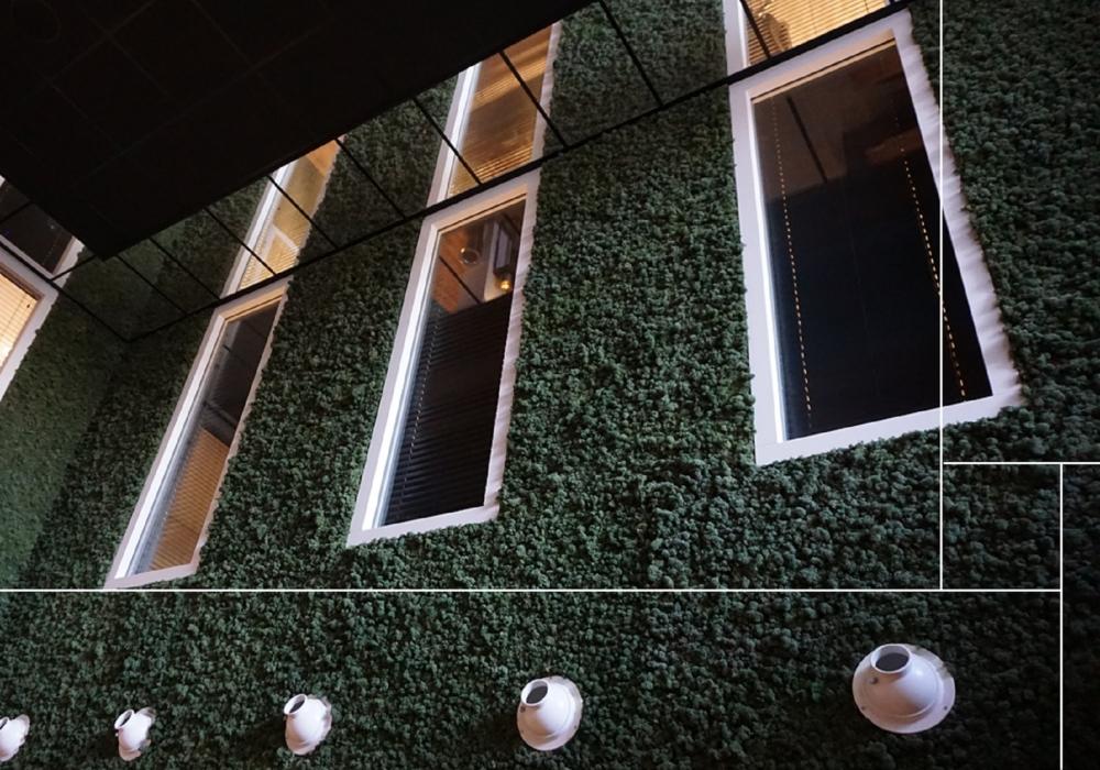 Torvtak mosgreen Tundra moss, Moswand Leyhoeve Groningen