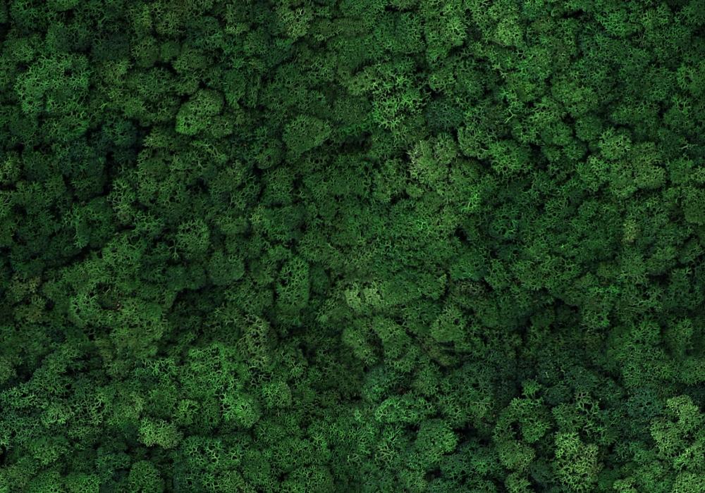 Torvtak icemoss mosgreen uit de Tundra moss collectie