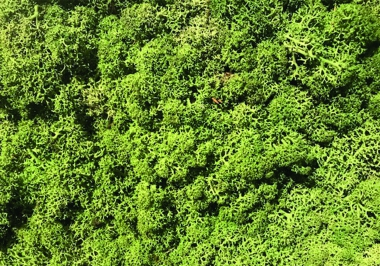 400176 Torvtak middle green wand
