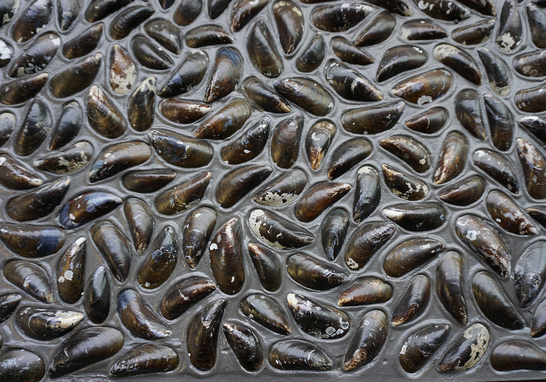 Grijze Dutch dyke black uit Causeway Stones collectie