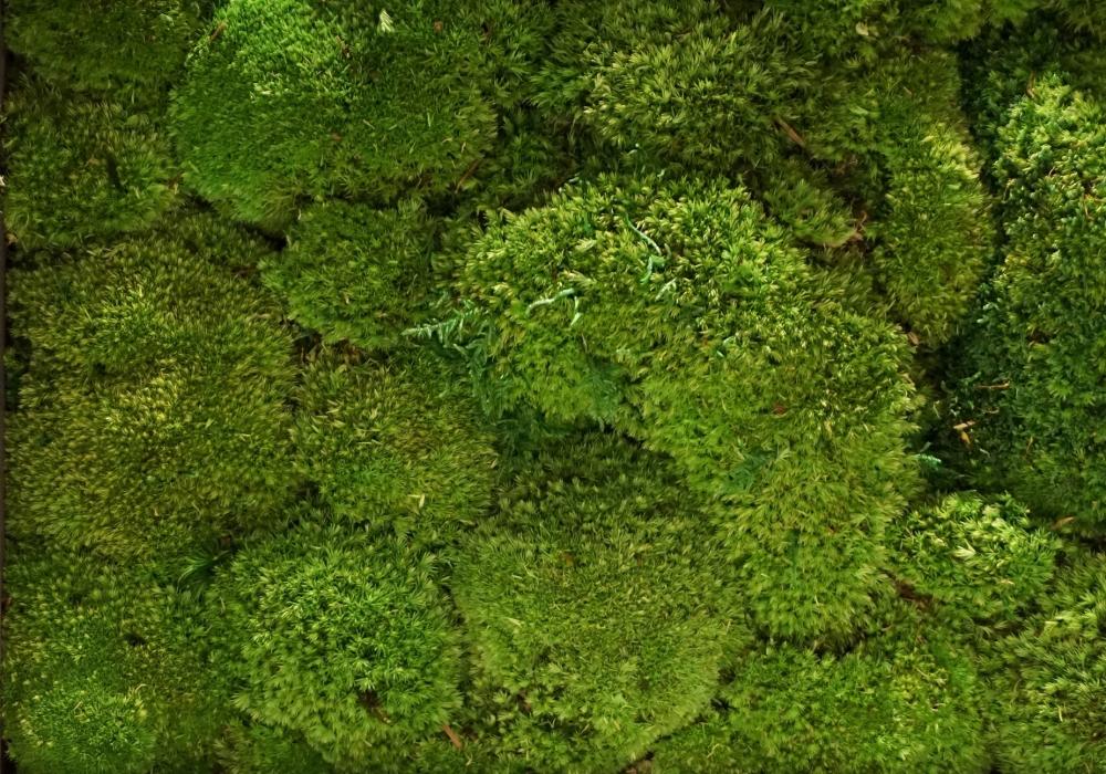 Gamme bolmoss uit de Tundra moss collectie