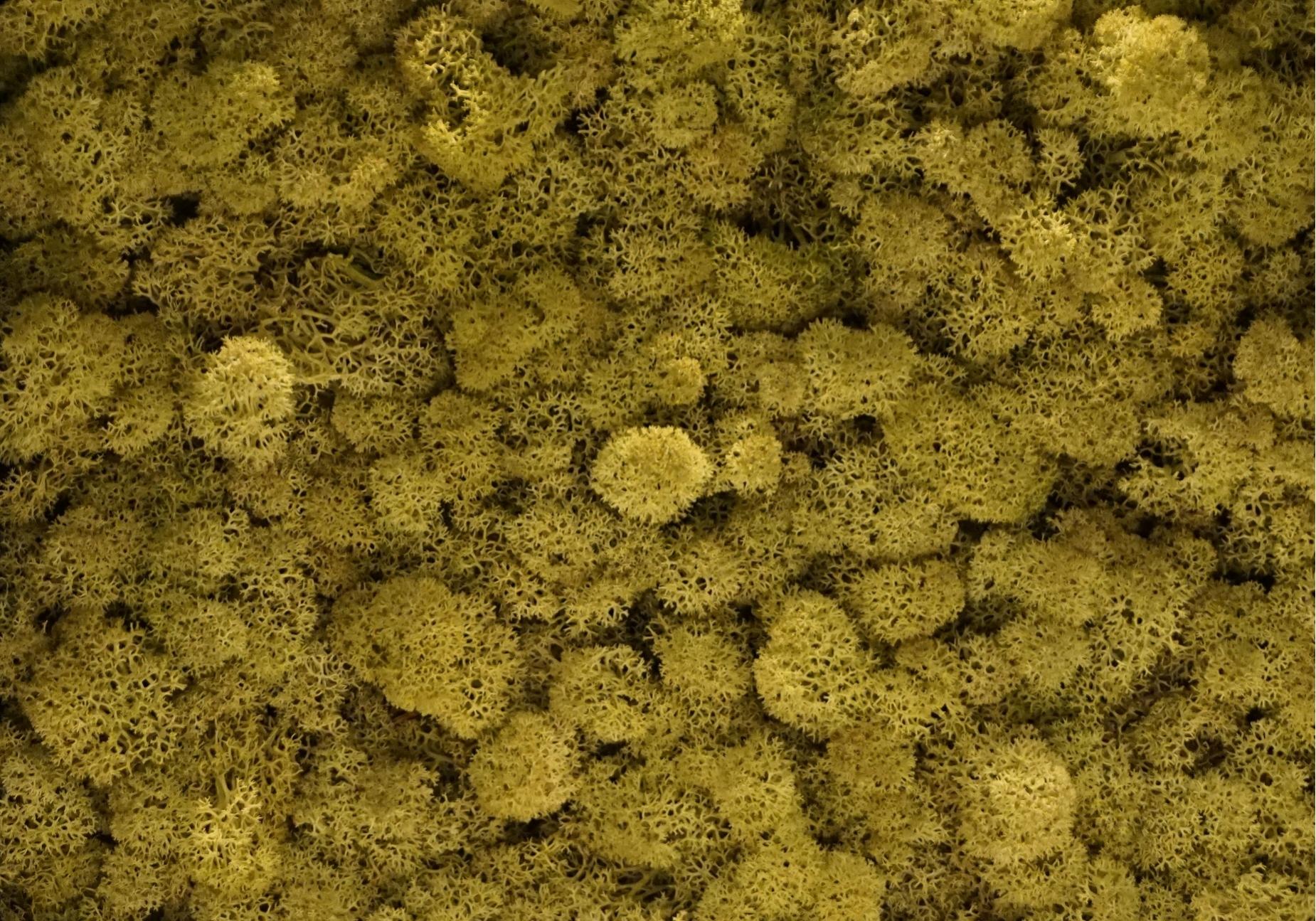 Torvtak icemoss uit de Tundra moss collectie