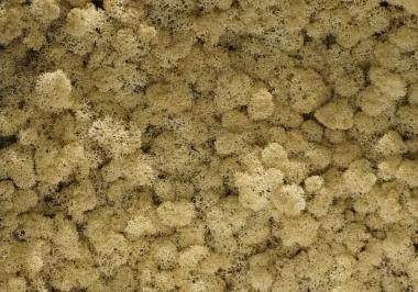 Torvtak orgaisch naturel icemoss uit de Tundra moss collectie