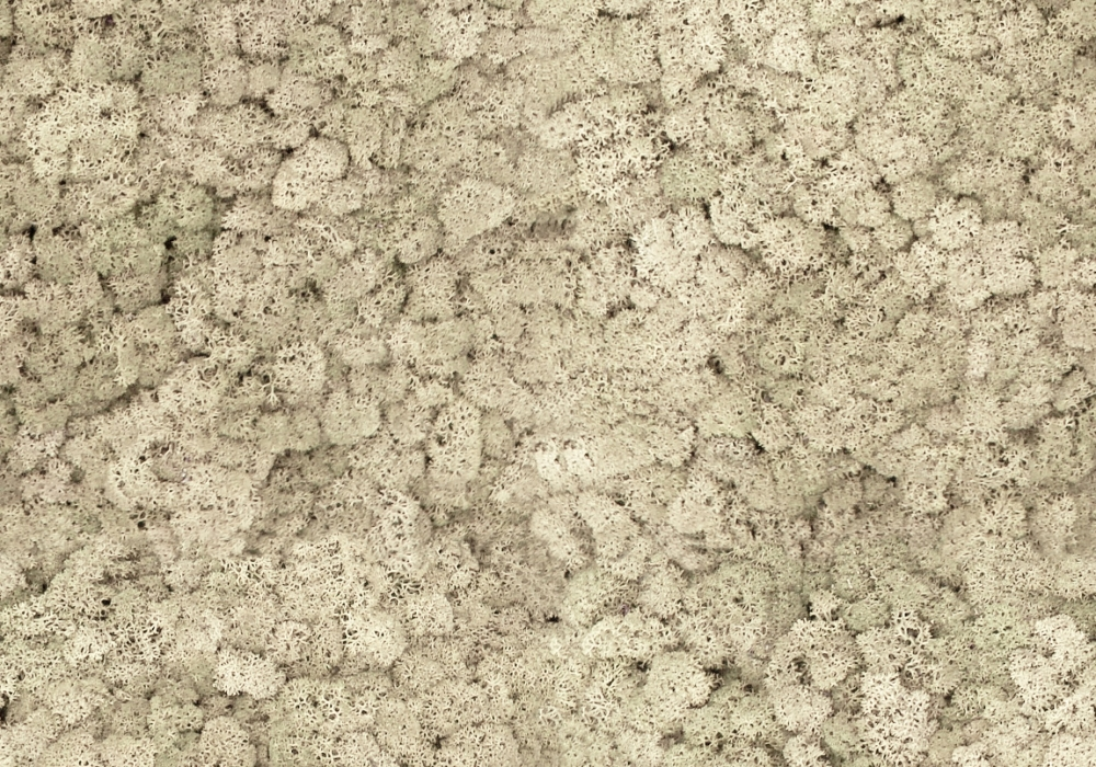 Torvtak organisch misty white ijslands mos uit de Tundra moss collectie