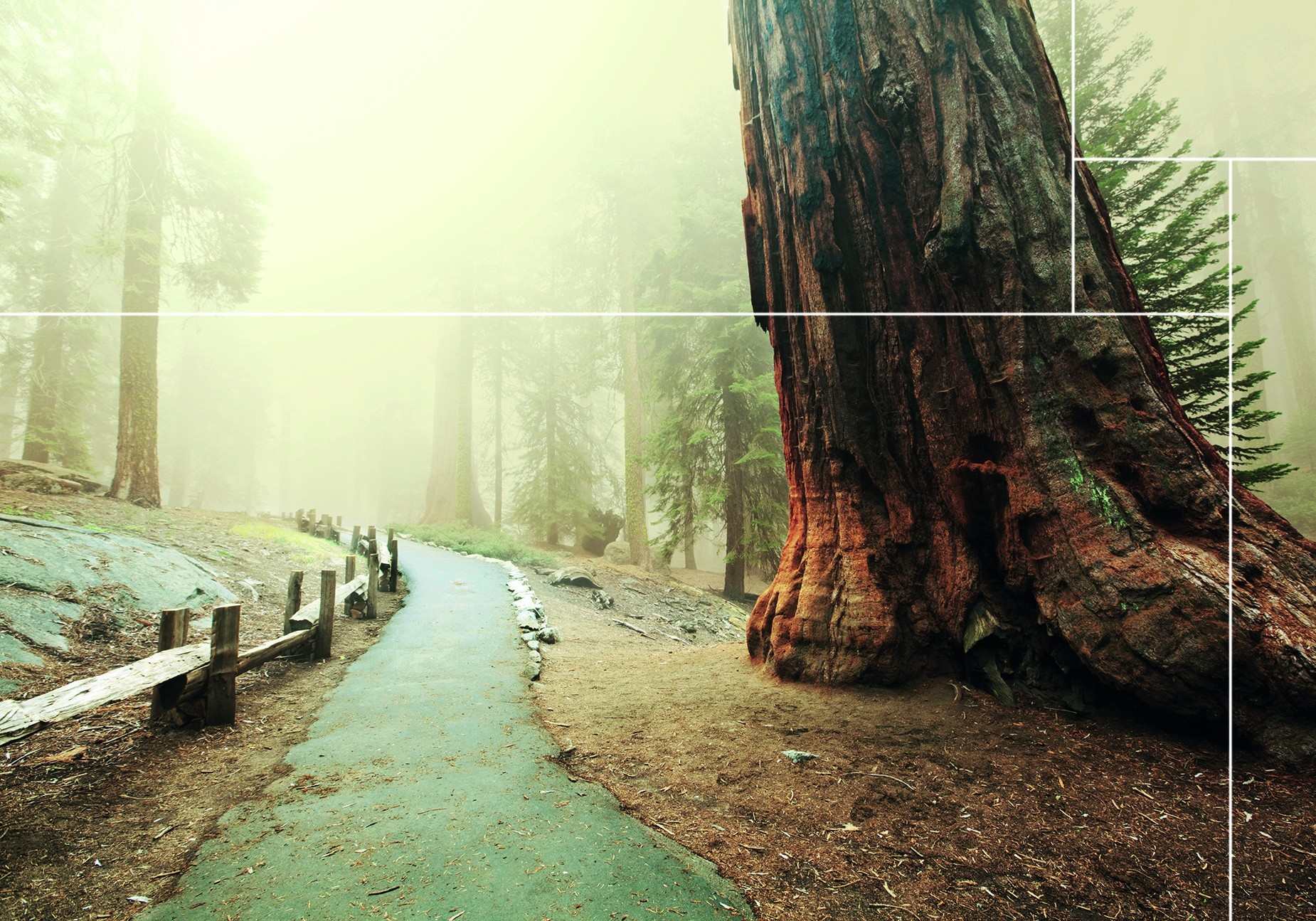 Doe hier uw hout idee op van de Sequoia woods collectie |Nature@home