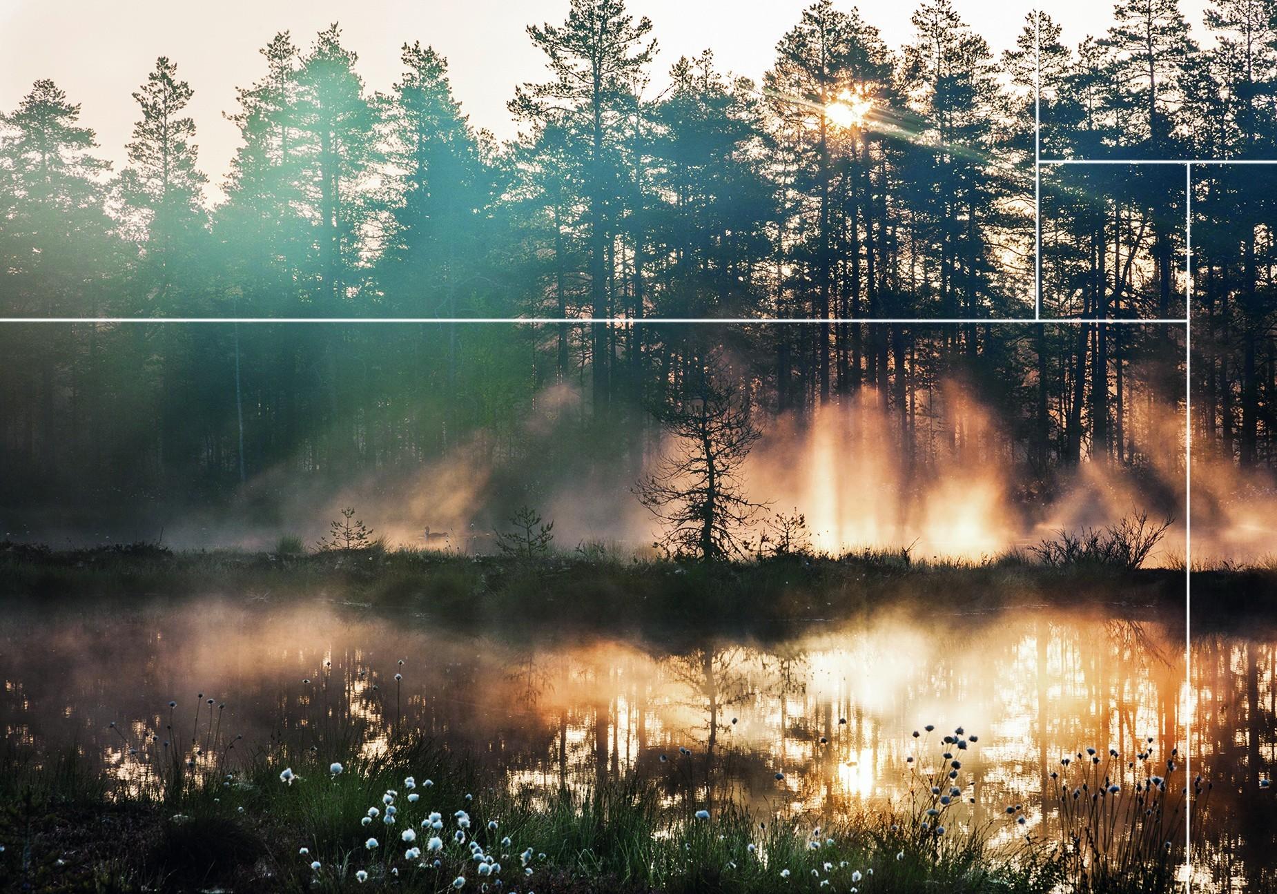 Bekijk de wall panels van de Oulanka Forest collectie |Nature@home