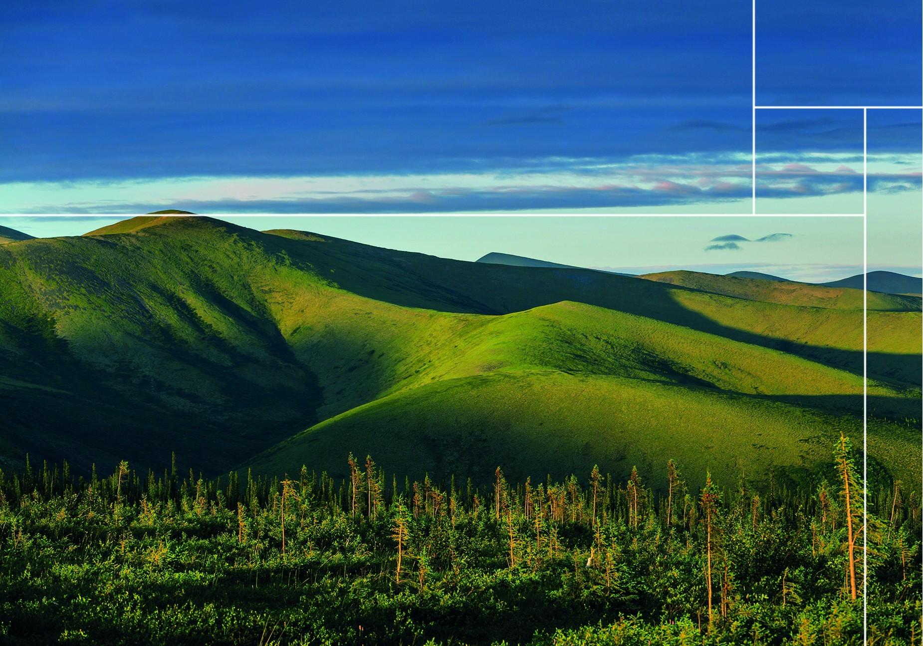 Bekijk hier de moss panels van de Tundra moss collectie |Nature@home