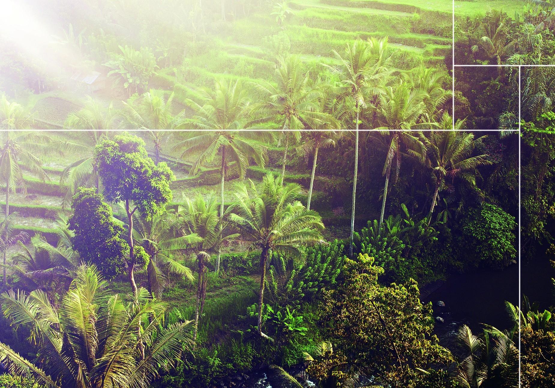 Bekijk hier de wanddecoratie van de Ubud Jungle collectie |Nature@home