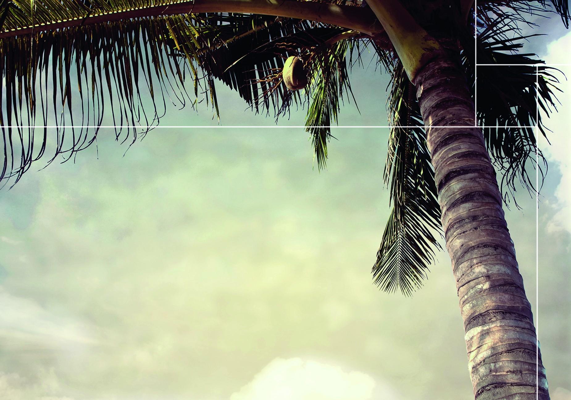 Vind hier de wanddecoratie van de Boracay Beach collectie |Nature@home